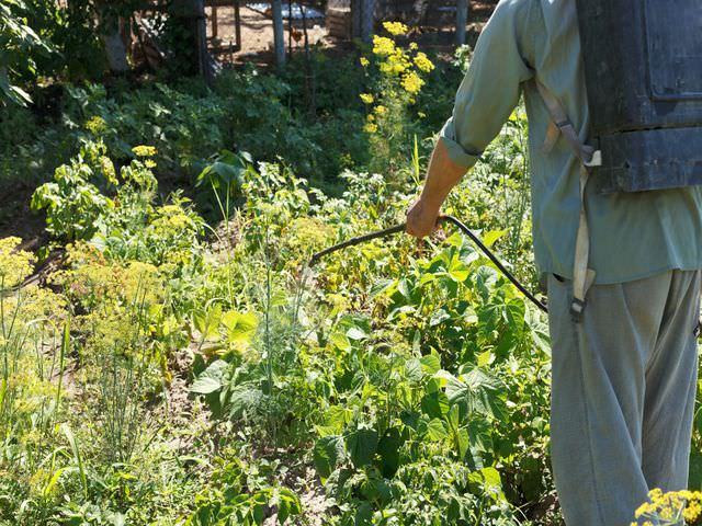 Пестицид танос работают по мучнистой росе
