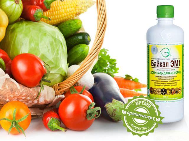 Микробиологическая подкормка для овощей
