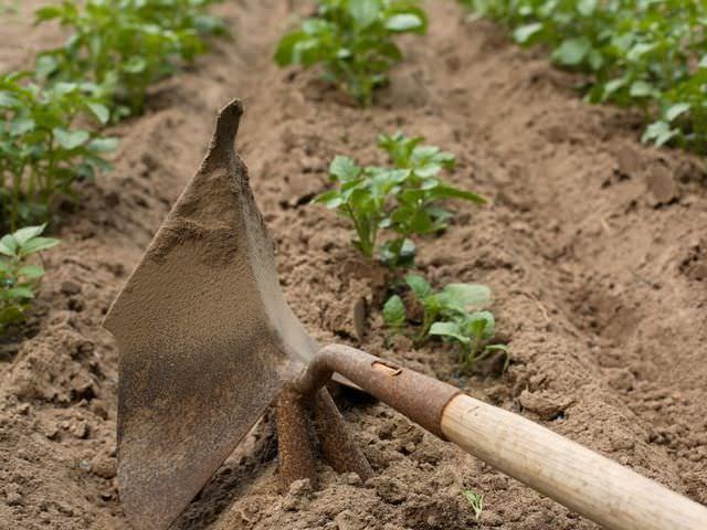 Почва для овощей