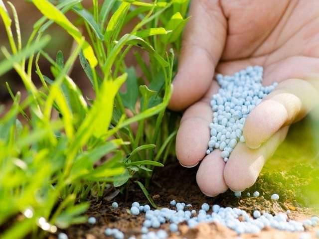 фосфорные подкормки для садового участка