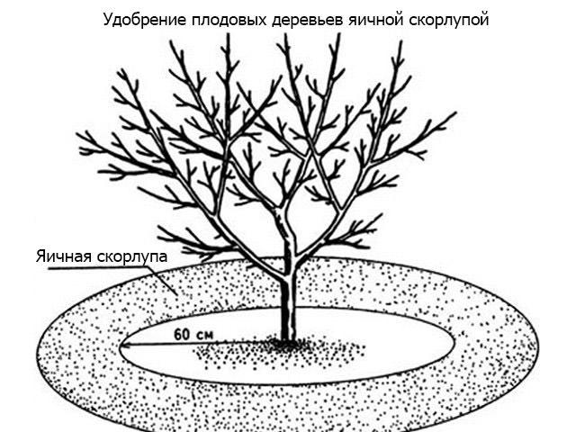 Удобрение для растений из яичного белка