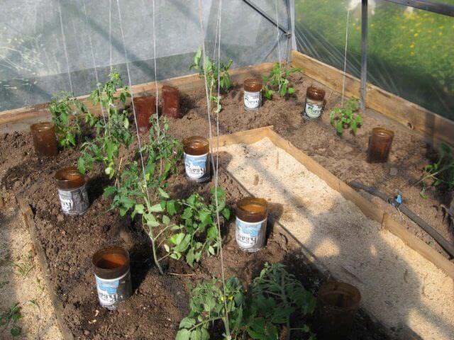 Орошение растений