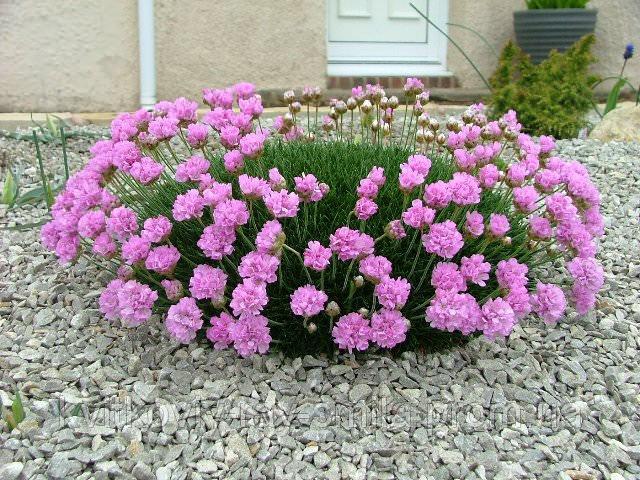 Цветок среднего яруса