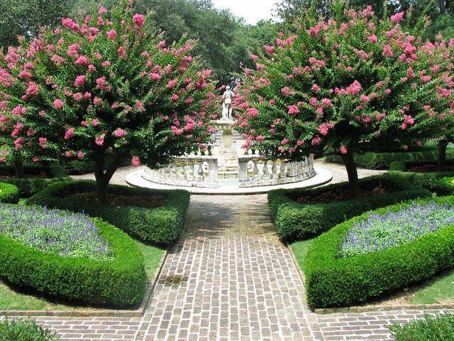 Цветущие редкие кустарники