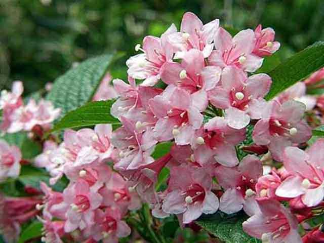 Растение цветущее с апреля