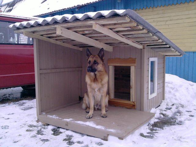Собачий дом