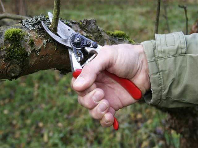 Уход за взрослым деревом